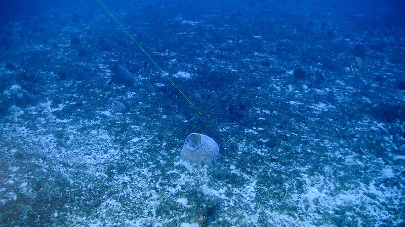 La barriera corallina amazzonica: un bio-patrimonio in pericolo