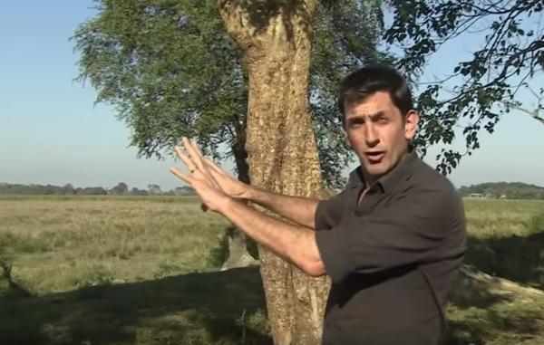 Filmavano chi spara a vista nelle riserve in India, il governo mette al bando la BBC
