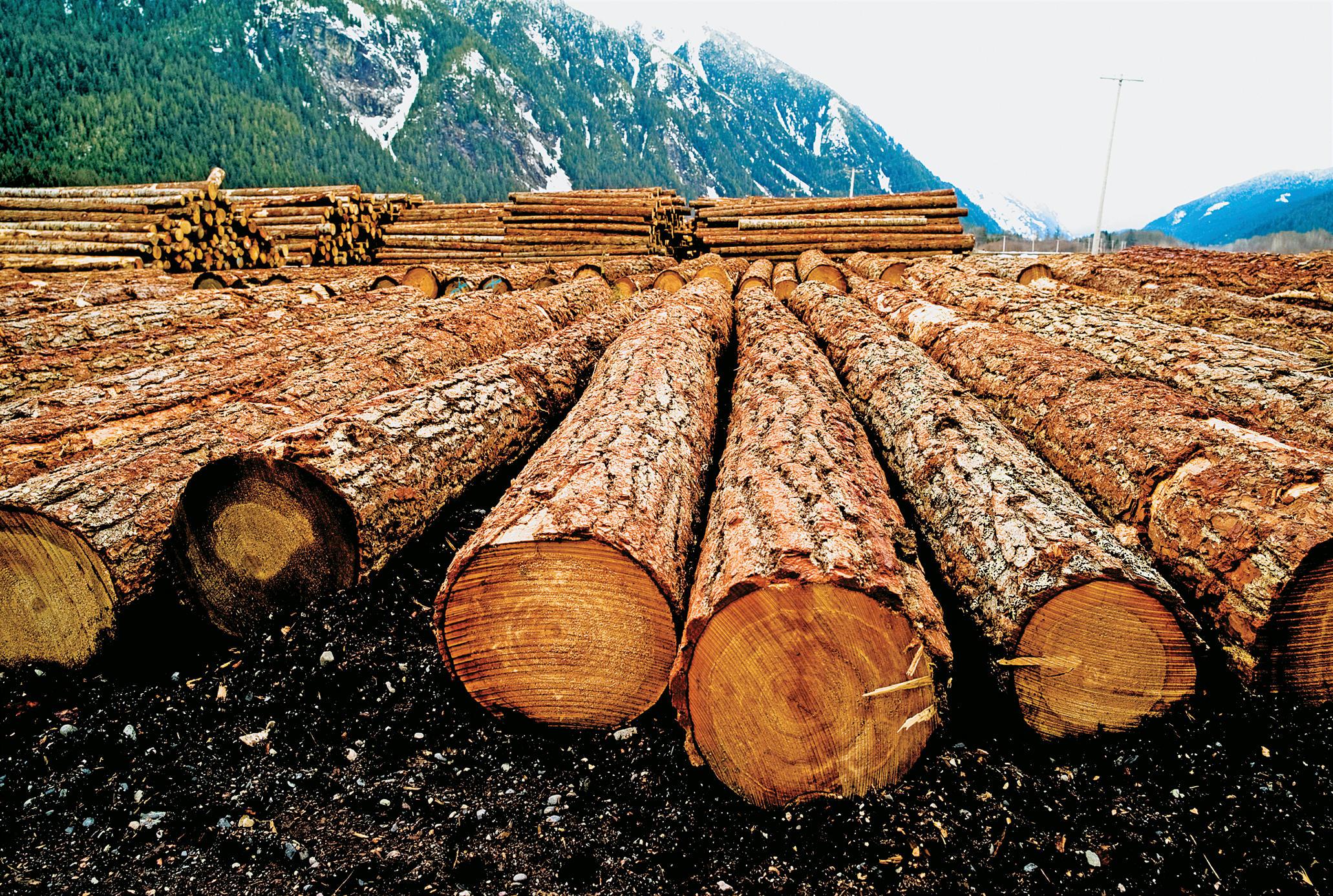 L'industria della carta divora una delle ultime grandi foreste del pianeta