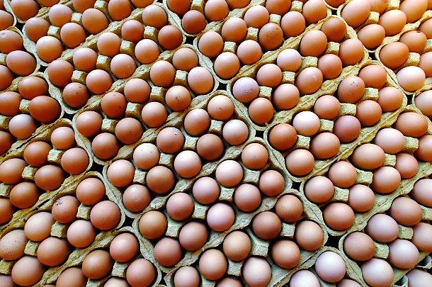 Uova al fipronil: si estendono sequestri e ritiri dal mercato
