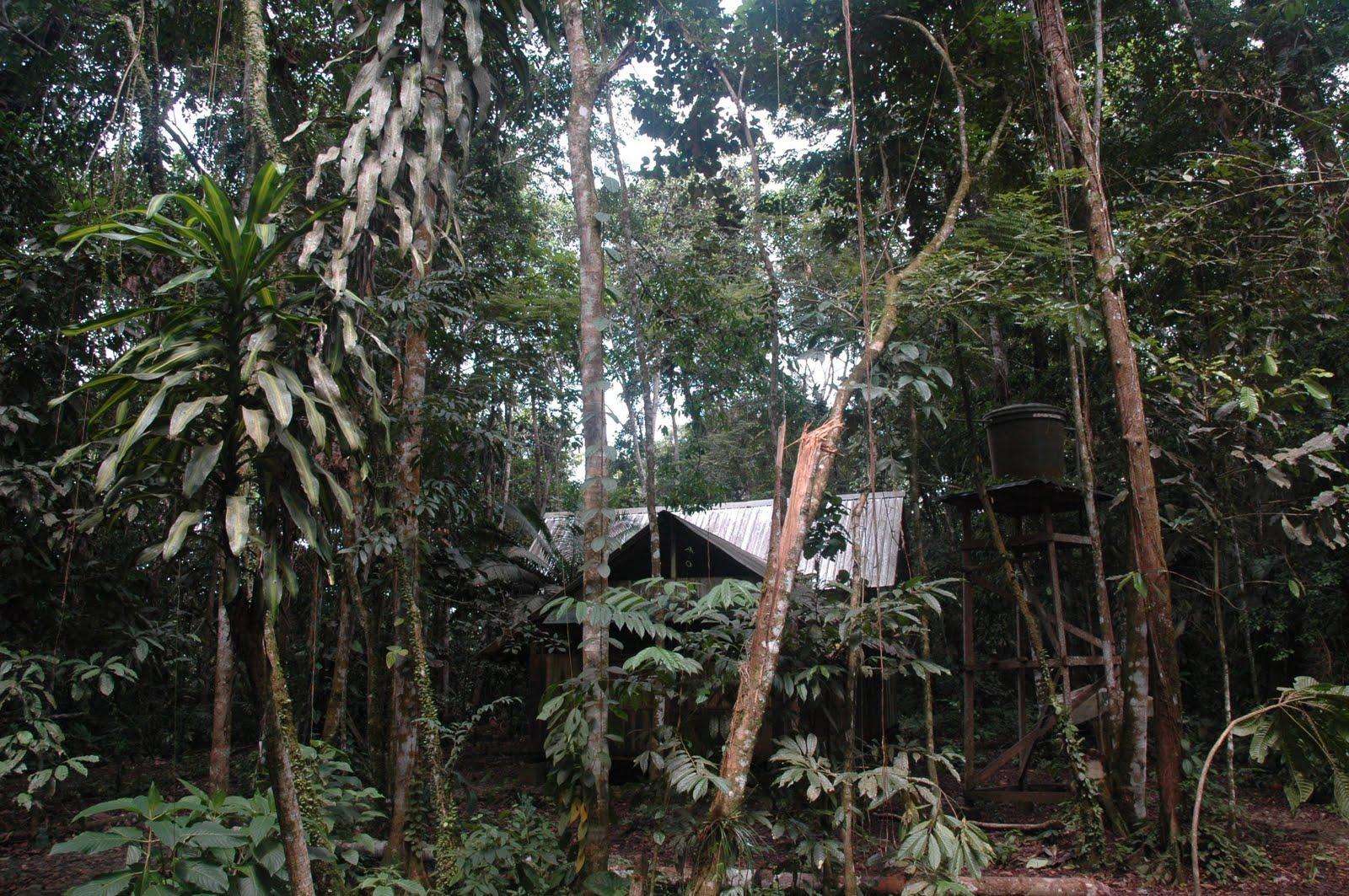 L'antropologa: «Impariamo dalle culture che rispettano la natura»