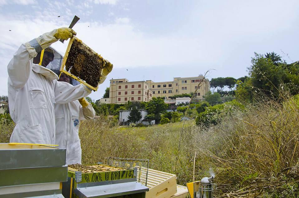 Roma: l'apicoltura arriva in città