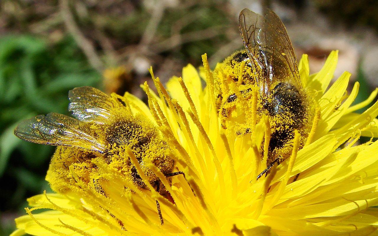 Anche a Natale si possono salvare le api!