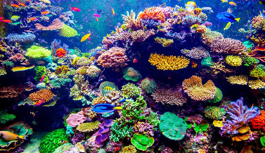 Stop alle attività estrattive off shore: ci voleva il Belize per dare l'esempio al mondo