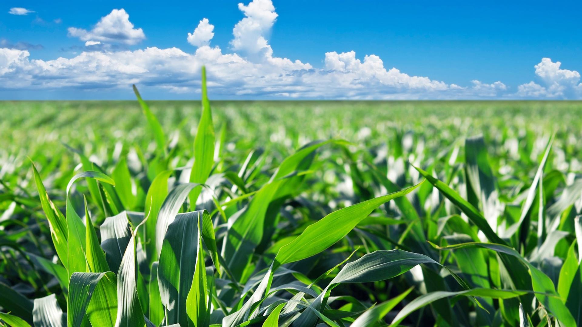 Per un'agricoltura libera dai veleni delle multinazionali
