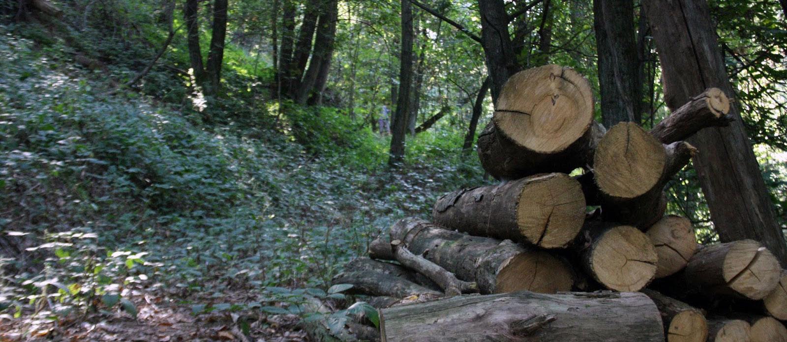 Isde: «No al via libera alla distruzione dei boschi»