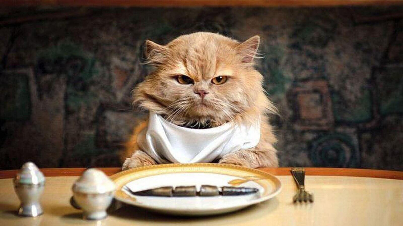 I gatti hanno bisogno di mangiare le bacche di Goji?