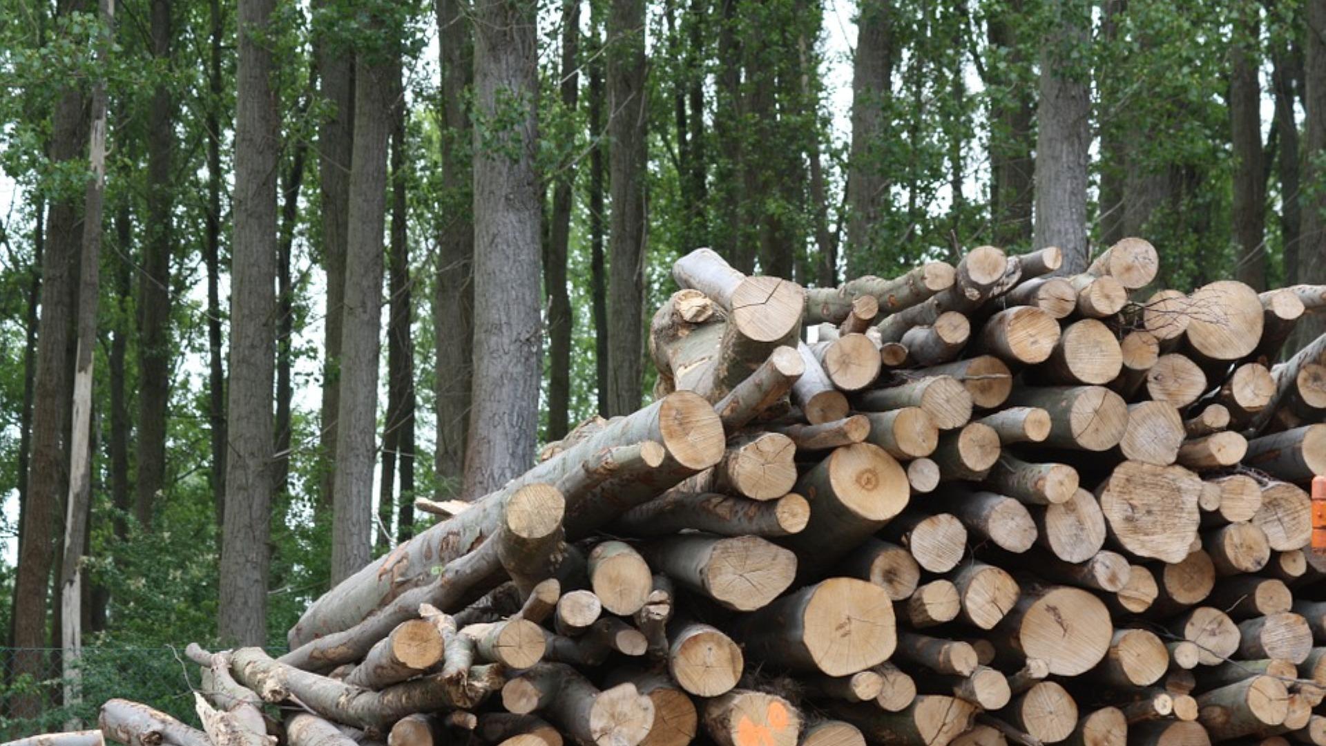Isde: «Basta incentivi pubblici per la combustione di biomasse»