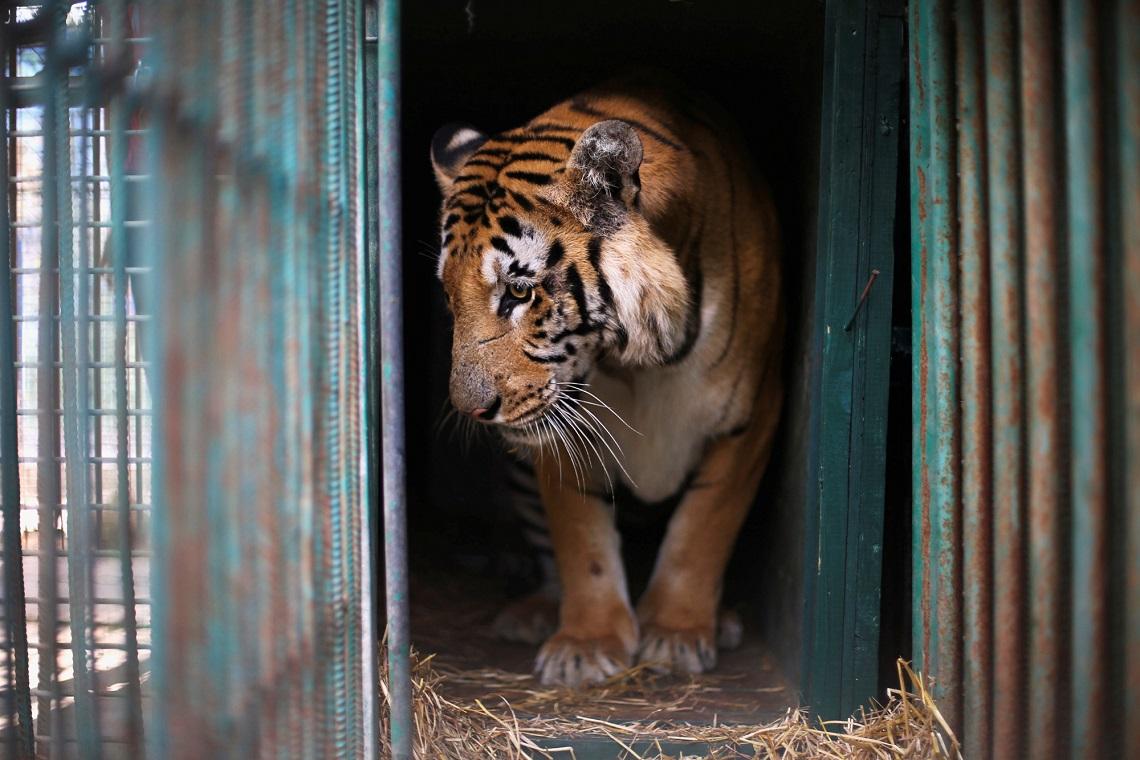 Rinchiusi, addestrati, ubbidienti, mangiati: vogliamo veramente bene ai nostri animali?